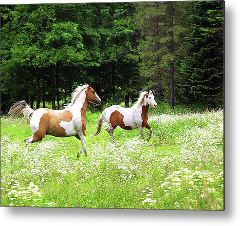 Through the Field Metal Print