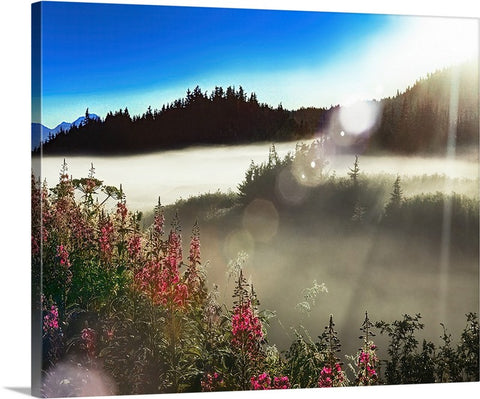 Fireweed Alaska Sunrise Canvas