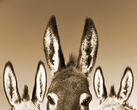 All Ears Sepia Standard Art Print
