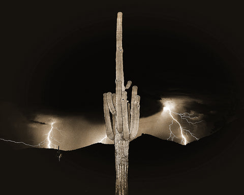 Arizona Monsoon Sepia, Sonoran Desert Standard Art Print