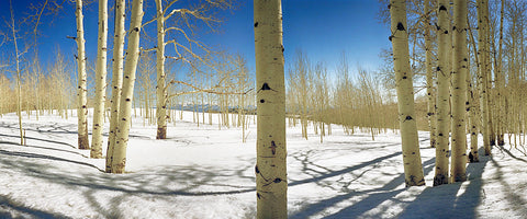 Aspen Meadow Snow Panoramic Standard Art Print