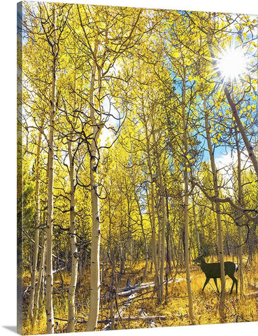 Aspen Deer Canvas