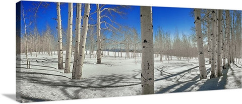 Aspen Meadow Snow Panoramic Canvas