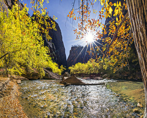 Autumn Burst Along the River, Zion Natl Park Metal Print