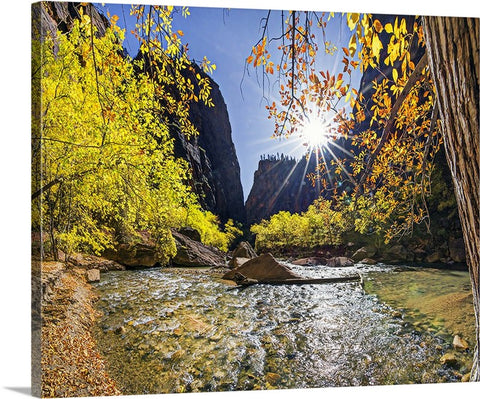 Autumn Burst Along the River, Zion Natl Park Canvas