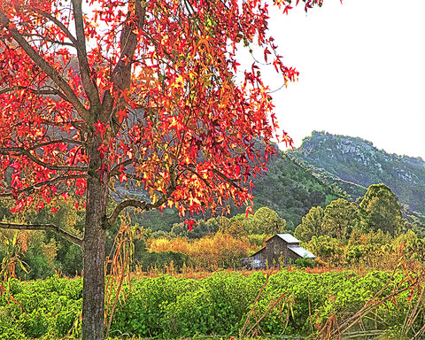 Autumn Barn, Valley Center, California Standard Art Print