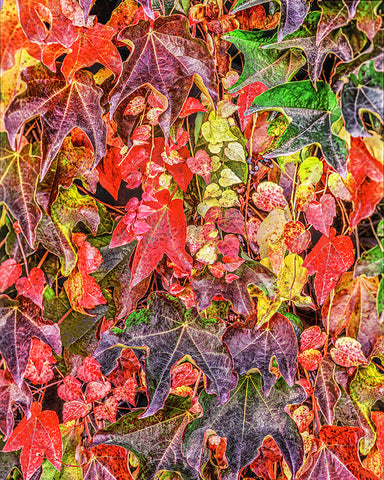 Autumn Leaves Standard Art Print