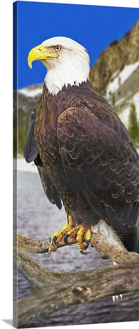 Bald Eagle Panoramic Canvas