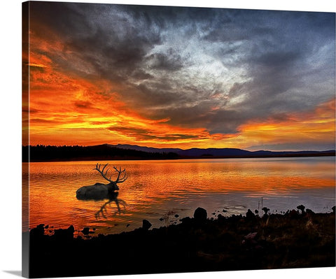 Big Lake Elk Canvas