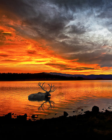 Big Lake Elk Vertical Standard Art Print