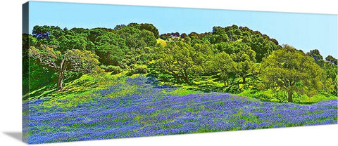 Blue Lupine Hillside Panoramic Canvas