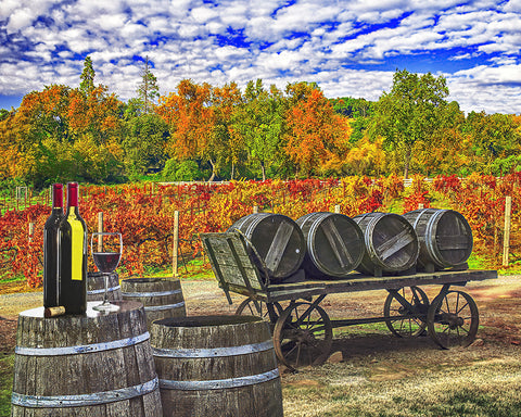 Wine Barrel Wagon Standard Art Print