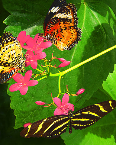 Butterflies and Flowers Standard Art Print