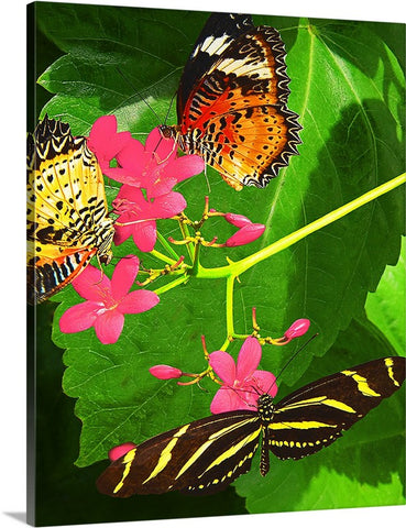 Butterflies and Flowers Canvas