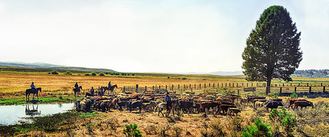 High Country Color Cattle Drive Panoramic Metal Print