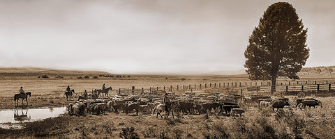 High Country Cattle Drive Sepia Panoramic Metal Print