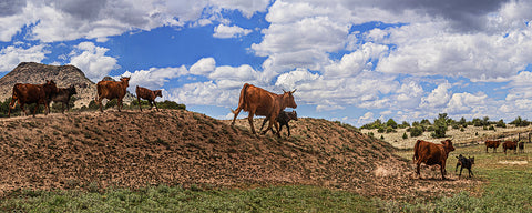 Cattle Hill Chino Valley, Arizona Panoramic Metal Print
