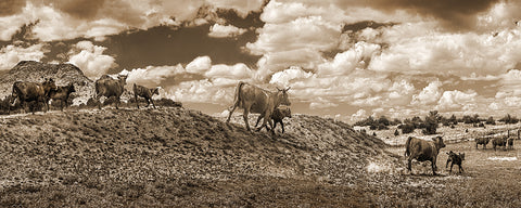 Cattle Hill Chino Valley, Arizona Sepia Panoramic