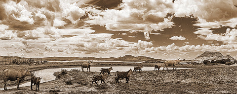 Cattle at the Watering Hole, Chino Valley, Arizona Sepia Panoramic Metal Print