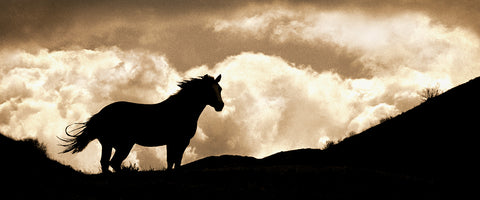 Cloud, Wild Stallion of Montana Panoramic Standard Art Print