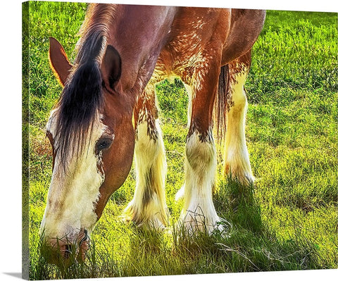 Clydesdale, Peaceful Giant Canvas
