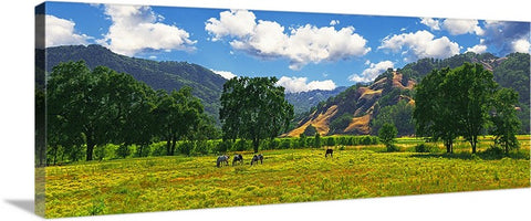 Coastal Valley Horses and Oaks, California Panoramic Canvas