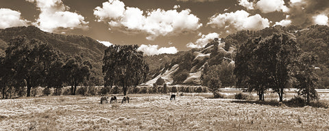 Coastal Valley Horses and Oaks, Sepia California Panoramic Metal Print