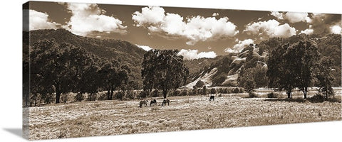 Coastal Valley Horses and Oaks, Sepia California Panoramic Canvas