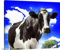 Cow Closeup, Happy Holstein of California Canvas
