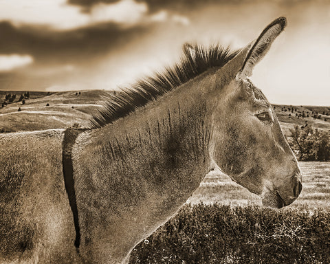 Donkey STanding Tall Sepia