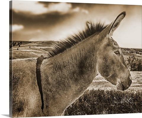 Donkey Standing Tall Sepia Canvas