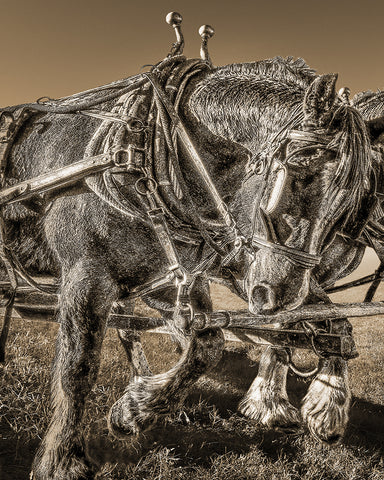 Working Draft Horse