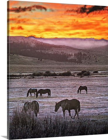 Grazing Wild Horses Canvas