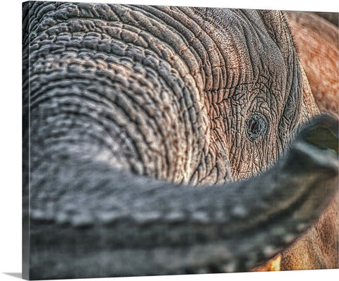 Elephant Closeup Canvas