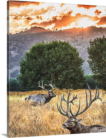 Elk Sunset Canvas