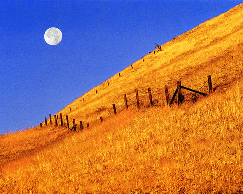 Fence LIne Full Moon
