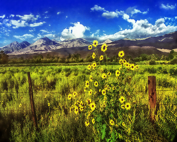 Flowers in the Valley Standard Art Print