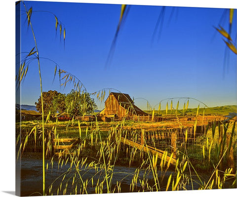 Barn Cattle Ranch Canvas