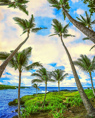 Tropical Paradise, Maui, Hawaii