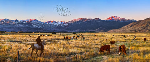 High Country Cattle Panoramic Metal Print