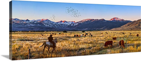 High Country Cattle Panoramic Canvas