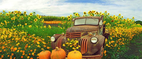 Pumpkin Truck Panoramic Metal Print