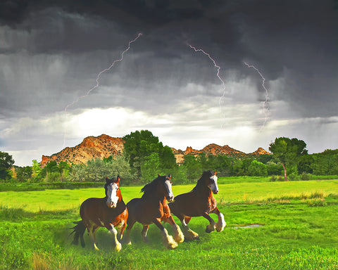 Horse Lightning, New Mexico