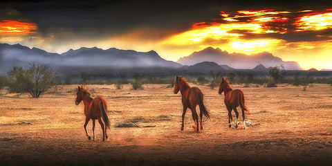Indian Ponies Panoramic, Superstition Mountains, Arizona