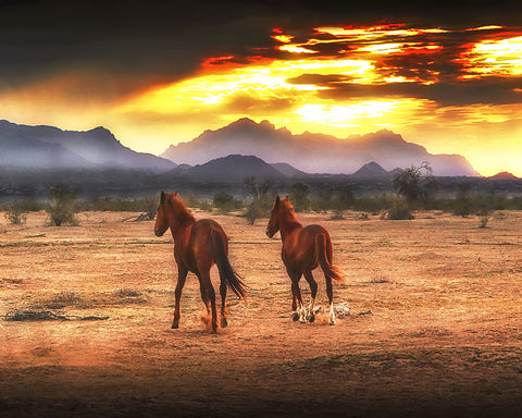 Indian Ponies, Superstition Mountains, Arizona