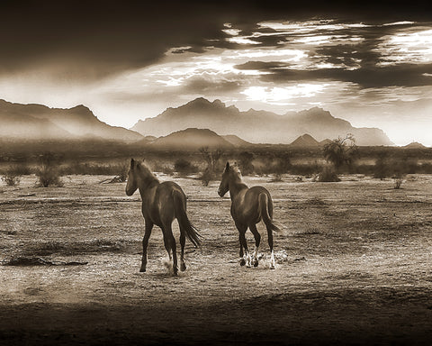 Indian Ponies Sepia, Superstition Mountains, Arizona