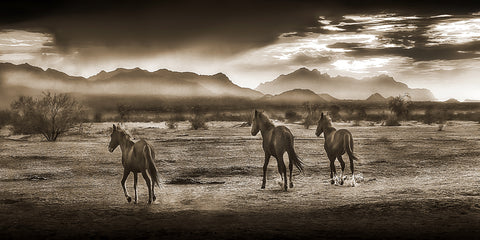 Indian Ponies Sepia Panoramic Metal Print