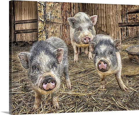 Interrupting Dinner, Three Little Piggies Canvas