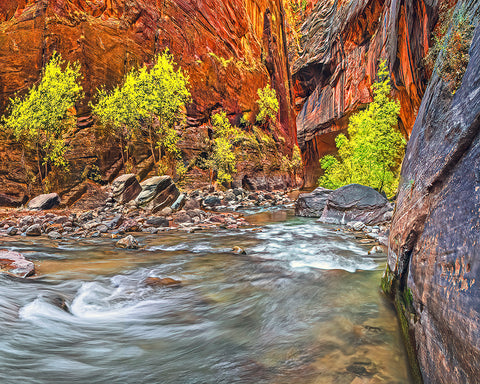 Inside the Narrows Right, Zion National Park, Utah Standard Art Print