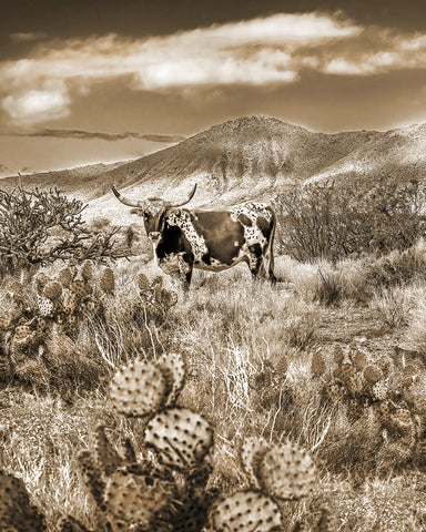 Longhorn, Magnificent Markings Vertical Sepia Metal Print